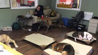 More Duration Place Work During Snowstorm Aggressive Dog Training