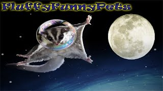 ПРИКОЛЫ СМЕШНЫЕ ЖИВОТНЫЕ 2019 РЖАКА ДО СЛЕЗ ЛУЧШАЯ ПОДБОРКА ВИДЕО коты и собаки Fluffy Funny Pets