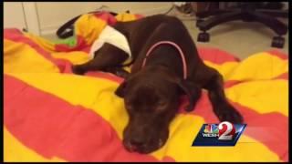 Orlando roommates find, save badly injured dog