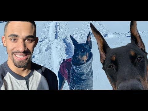 SLEDDING WITH DOBERMAN | Derek554 Daily Vlog