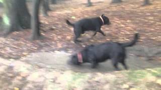 Dziki w lesie vol1