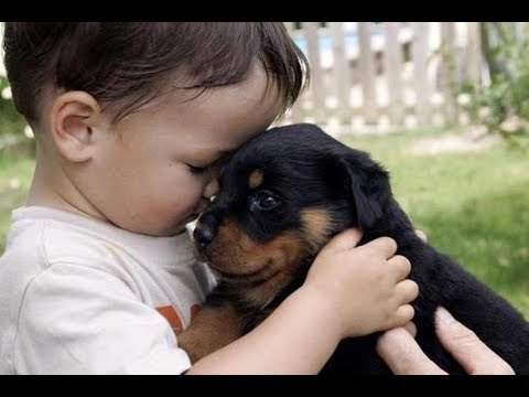 Puppy are best friend to grow up with baby - Cute Puppies and Babies Compilation