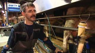 Brodowin Eco-Village - economic success with contented cows | Made in Germany