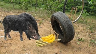 Amazing Quick Wild Pig Trap Using Car Wheel And Old Wheels - How To Make Wild Pig Trap Car Wheel