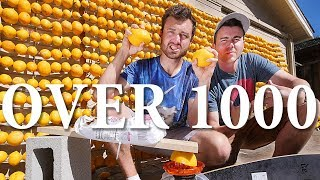 Download How Many Lemon Batteries Does It Take to Do Something Useful? Mp3 and Videos