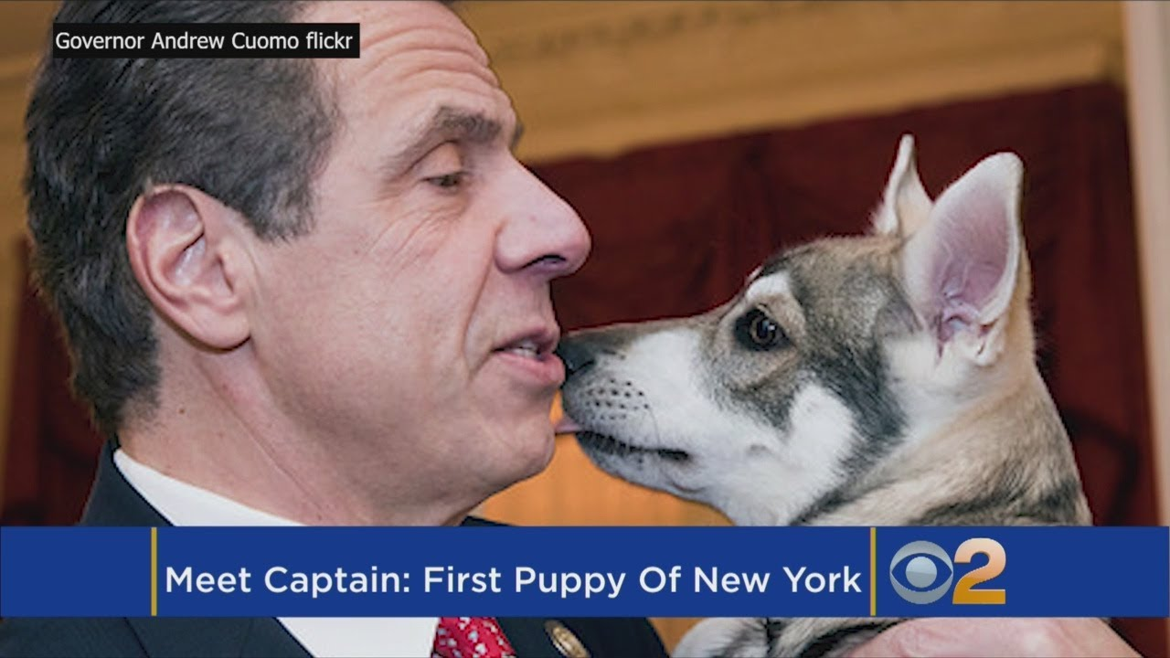 Gov Cuomo Introduces Captain The First Puppy Youtube