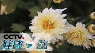 《健康之路》 20190620 一方水土一方药——菊花| CCTV科教