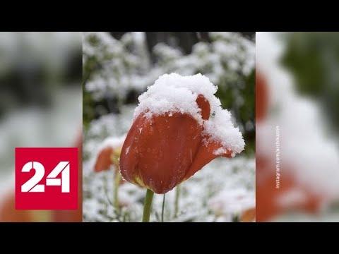 Рецидив зимы: в России появились майские сугробы - Россия 24