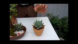 Plantas para la buena suerte  3