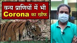 वन्य प्राणियों में भी Corona का खौफ, Indore Zoo में अतिरिक्त सुरक्षा