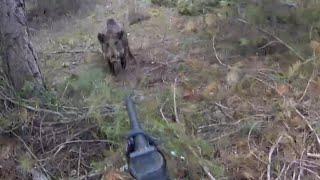 OMAK Aksiyon dolu harika atışların olduğu domuz avları 3!Great wild boar hunts.