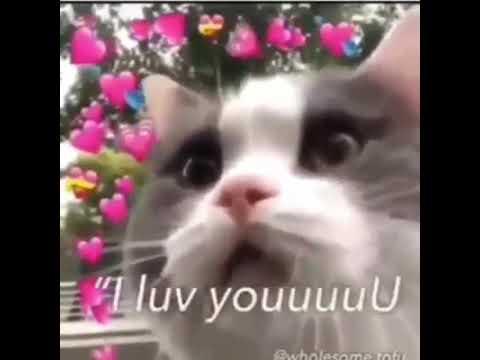 Cat meme *cat say i love you mood edit* - YouTube