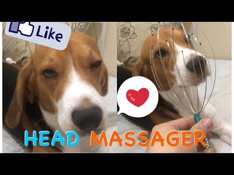 Marcel the Beagle Boy Uses Head Scalp Massager