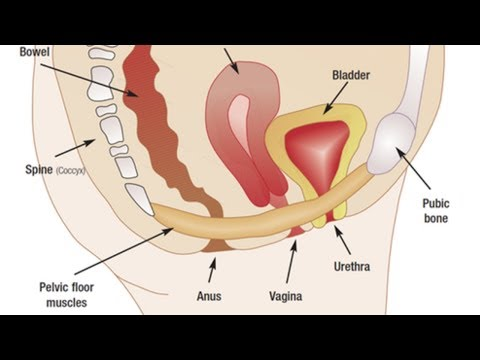 how to strengthen pelvic floor muscles quickly (pelvic floor exercises for incontinence)
