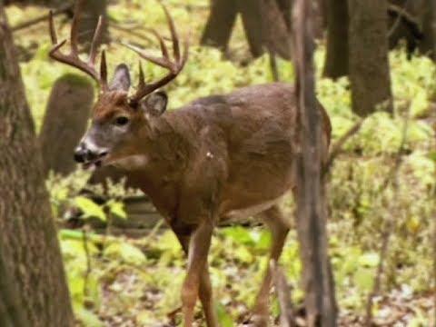 Minnesota DNR To Release Statewide Deer Management Plan