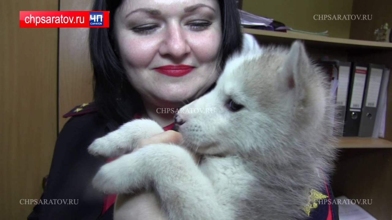 Щенки и Мама собаки в Университете Лобачевского Нижний Новгород .