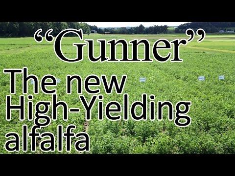 Forage Day - Alfalfa