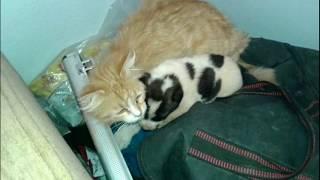 戦禍のシリアにて。保護施設「猫の家」で子犬の面倒を見る母猫が発見された