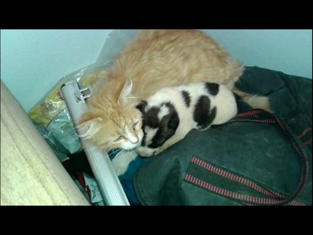 A Mama cat heard a motherless puppy crying – WONDERFUL REACTION