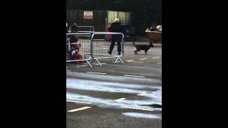 Cheshire Police Open Day - Introducing The Police Dogs