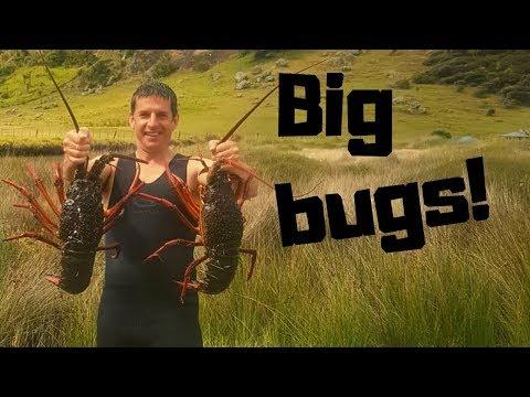 Massive Crayfish Haul!!! Far North NZ Freediving...