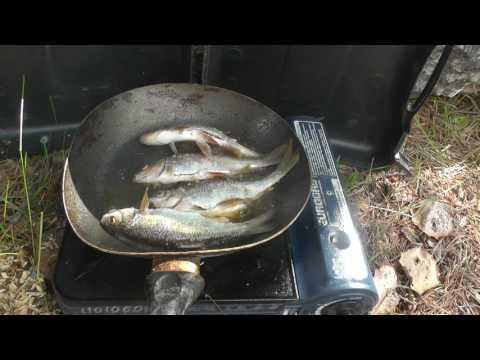 Ярковский район, рыбалка