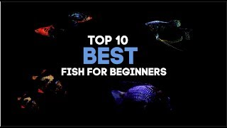 Top 10 Fish For Beginner Aquarist!!!