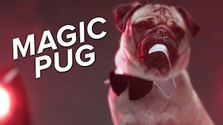 Doug The Pug Tries Sexy Halloween Costumes