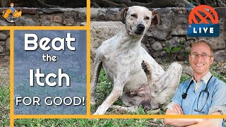 EVERYTHING You Need to Know About Itchy Skin in Dogs and Cats (stop scratching for good!)