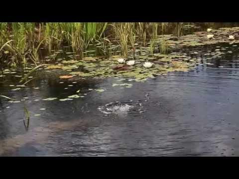 Hồ bơi thủy sinh thiên nhiên
