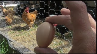 Backyard Chickens Start To Finish Day 1 To Eggs!