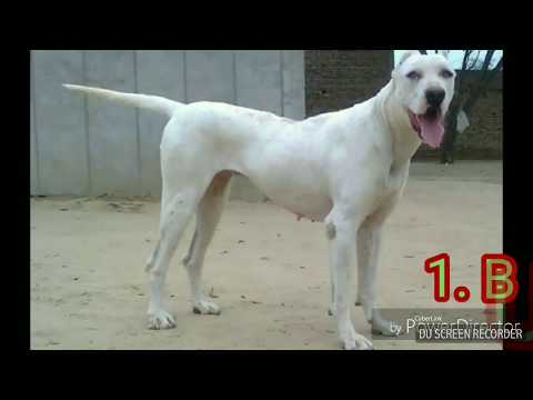 Dangerous Indian Dog Breeds
