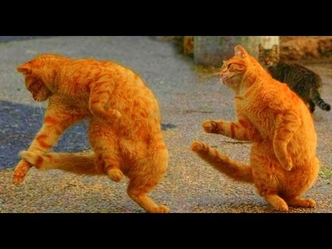 The Waltzing Cat  Leroy Anderson