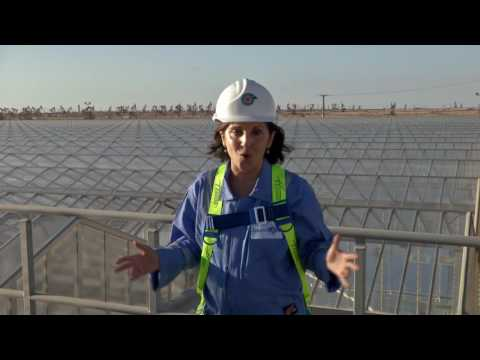 Can a solar plant operate on an oilfield? Here is one solar thermal plant that is...