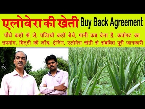 Start Aloevera Farming With Buy Back Agreement and Earn Good Profit