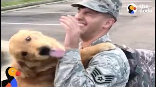 HAPPY Service Dog Reunites With Dad Returning From Helping Hurricane Victims | The Dodo