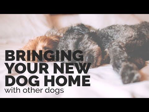 Introducing a New Dog into a Home with other Dogs