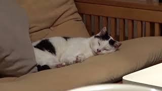 내 모텔방에 들어온 고양이 [긴수염동물기]