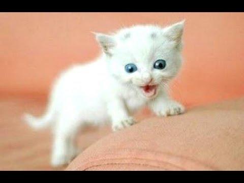 Morsomme Katter Og Kattunger Meowing 2016 Youtube