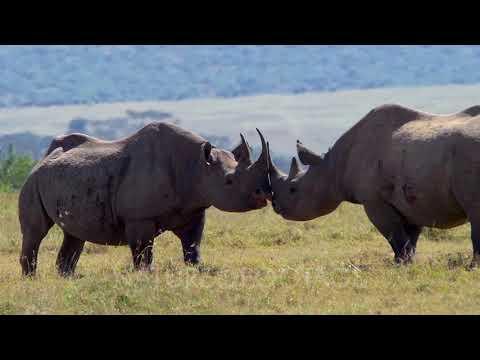 NatureFootage: Kenya,the Safari country,edited film 3 min