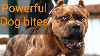 Top 8 Most Strongest Dog Bites Force in the World