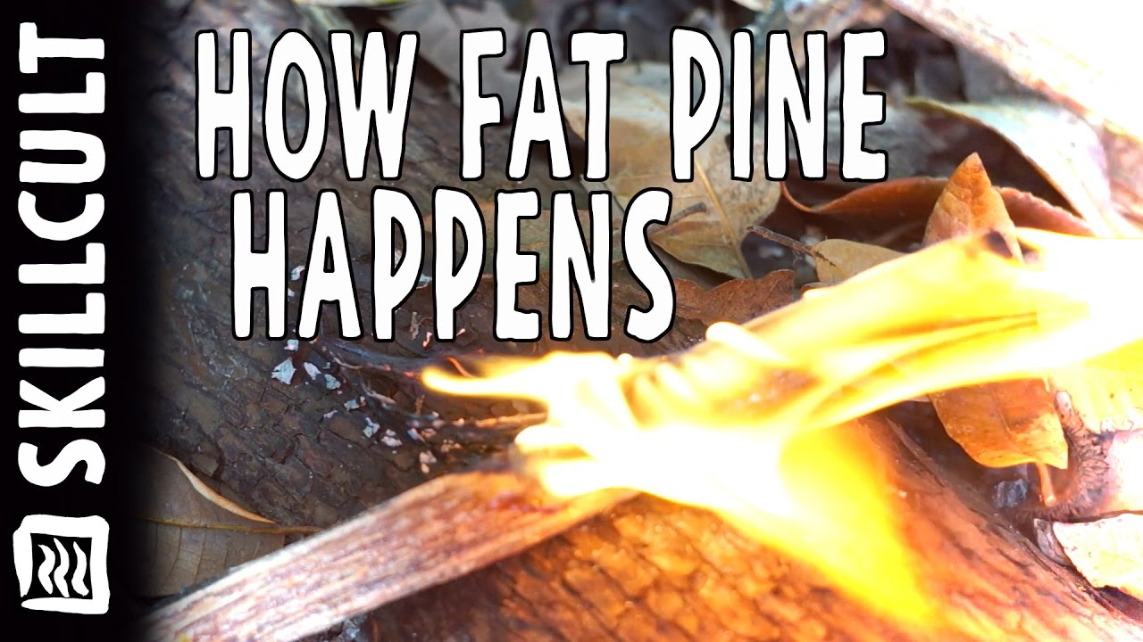 how pitch wood happens in two minutes creation of fat pine fat wood - Fatwood