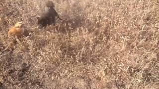 Спасск-Дальний Охота с подругой