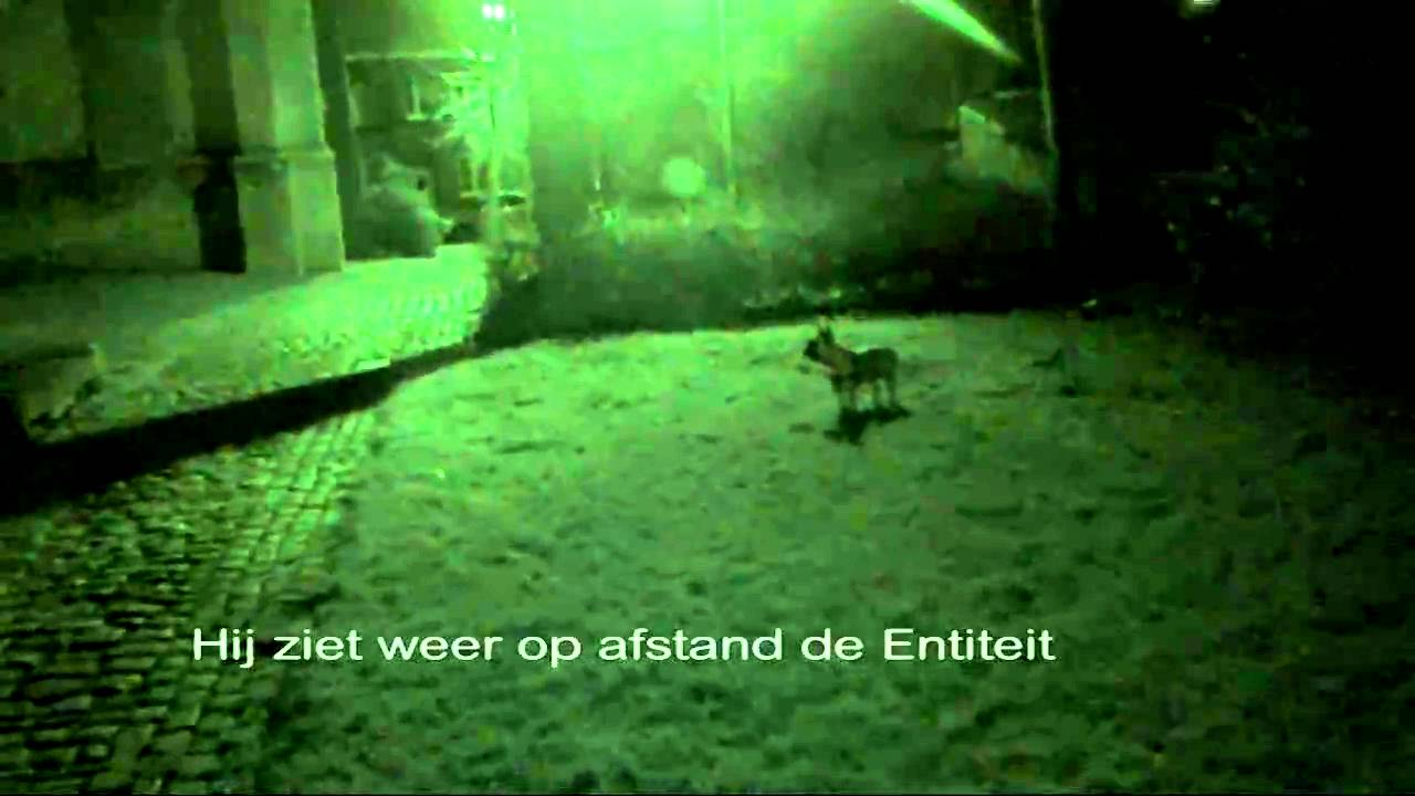 Can Dogs Sense the Paranormal and See Ghosts? - Dog ...