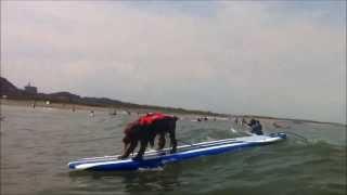 千葉県のサーフィン犬コーダです。 イングリッシュコッカースパニエル♂2...