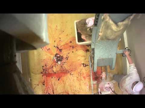 Abattoir made in France - certifié bio - démembrement - Le Vigan