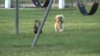 Dog vs Skunk