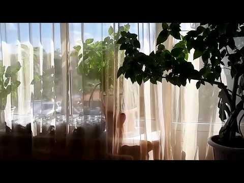 Недвижимость Ростовской области, Дом в Белокалитвинском районе 260 кв.м., п.Горняцкий