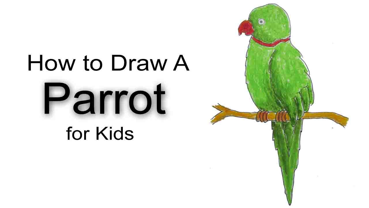 How to Draw a Parrot for Kids  YouTube