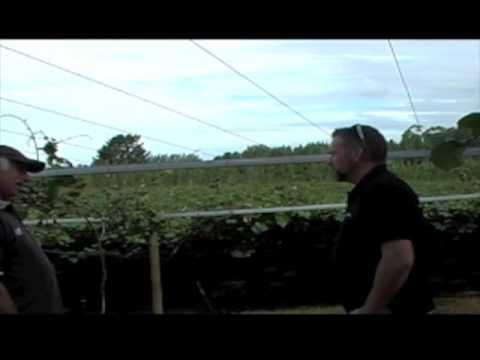 Brian Gordon Interview